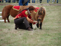 Mary Line Blondieau Shetlands - Paris Horse Show