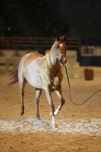 World Arabian Championship - Paris Horse Show